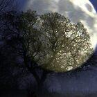 The Bleak Mid Winter by naturelover