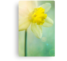 Sunshine and a little flower Canvas Print