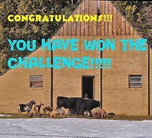 Barnyard Winners banner by the57man