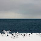 sky sea gulls snow by lucy loomis