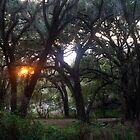 Sunrise Woven Mossy Oaks by Janis Lee Colon