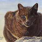 Izzy - Feral Cat at Rockaway by artbyakiko