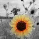 Wild Sunny by Carol Field