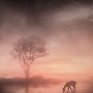Tree silhouette by Phoenix-Appeal