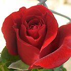 Sweet Smelling Rosey by BingoStar