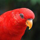 Birds Park by Adri  Padmos