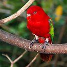 Birds Park 2 by Adri  Padmos