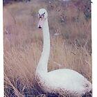 Goosey Gander  by Margaret Roberts
