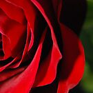 Red Red Rose 2 by Sunshinesmile83