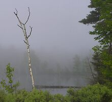 A Foggy Morning on Moxie Lake by MaryinMaine