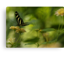 """""""Gliding in Pure Bliss-Conservatory Butterfly"""" Canvas Print"""
