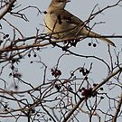 Songs of a mockingbird by katpartridge