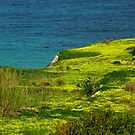 Fields of Gold - Selmun, Malta by leslievella64