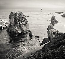 Shell Beach, CA by Andrei I. Gere