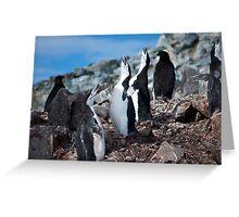 Chinstrap penguin chorus Antarctica Greeting Card