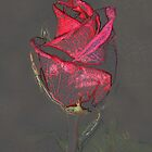 Rosebud by Daphne Gonzalvez