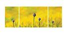 Yellow Garden by Anne Staub