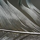 Feather 1 by Lynn  Gibbons