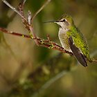 ANNA HUMMINGBIRD by Sandy Stewart