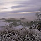 The Lake District: Frozen Grasses on Post Knott. by Rob Parsons