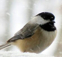 Chickadee In Snowstorm by Jean Gregory  Evans