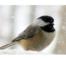Chickadee In Snowstorm Photographic Print