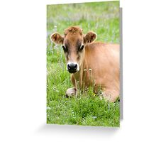 Caramello - NZ jersey cow Greeting Card
