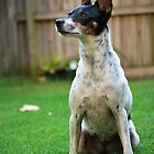 Alert Mini Fox Terrier X by mcreighton