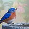 Mr. Bluebird, you make me happy! by Bonnie T.  Barry