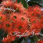 Ficifolia Festival, Drouin,  Australia by Bev Pascoe