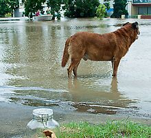 Jijaws St, Sumner Park, Qld floods 2011 by Tim  Geraghty-Groves