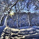 Sun through the snow by Guy Carpenter