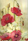 Poppies by Val Spayne
