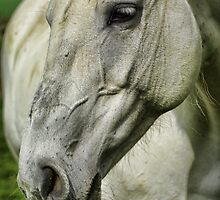 White Horse by Guy Carpenter