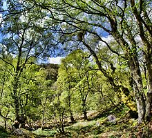 Gunnerside Gill Woodland by Guy Carpenter