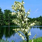 Yucca Blooms by the Lake by barnsis
