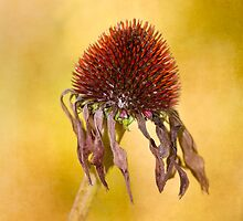 Wilting Beauty by Sarah-fiona Helme