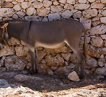 Donkey in the Shade by Tom Gomez