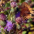 Thistles With Butterfly by Gail Falcon