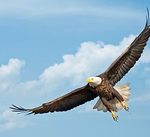 majestic flight by bettywiley