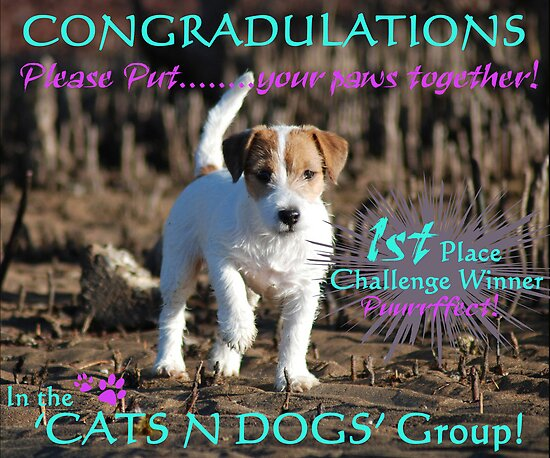 Cats and Dogs Challenge Banner by Emma Hardcastle