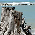 Stumped by the Sea by Belinda Osgood
