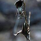 Web by Alexander Standke