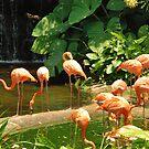 Birds Park 5 by Adri  Padmos