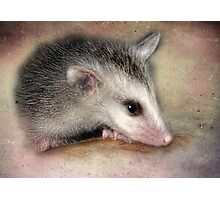 Possum Baby Photographic Print