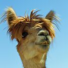 Bad Hair Day - Alpaca by Doty