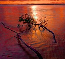 2 branches in shallow water lay by GeoffSporne