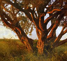 The Old Tree by Friederike Alexander