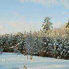 Winter Wonderland by Tracey Hampton