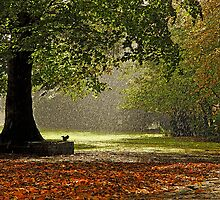 Autumn rain by Paul Newton